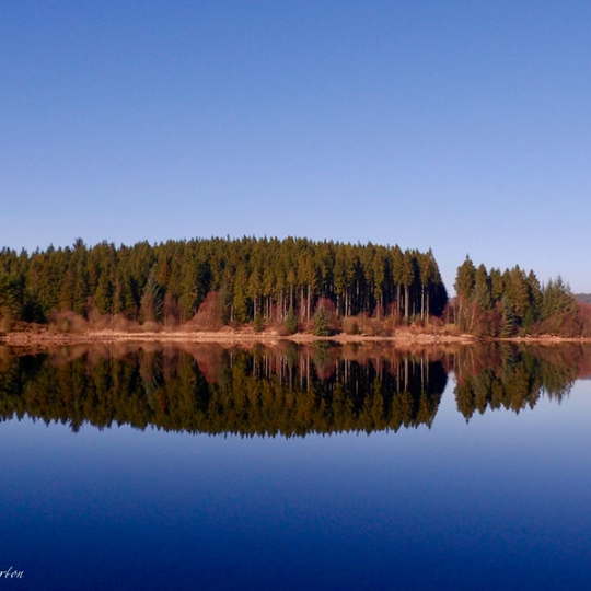 Kielder Water and tress